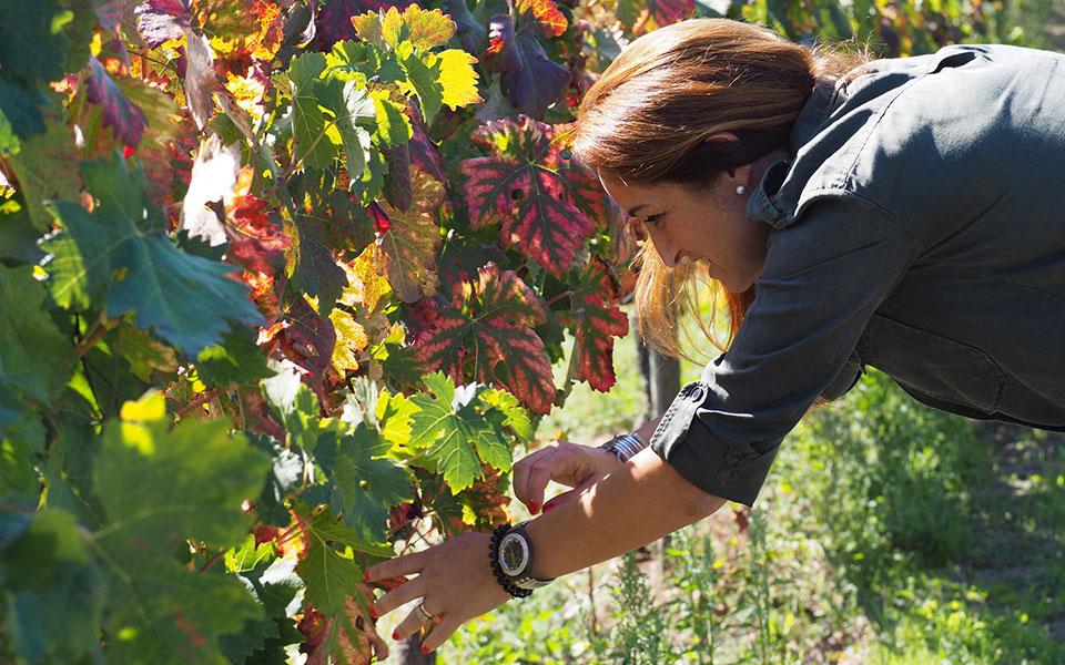 """A produtora do vinho """"Jardim de Granito"""", a apanhar uva nas suas vinhas."""